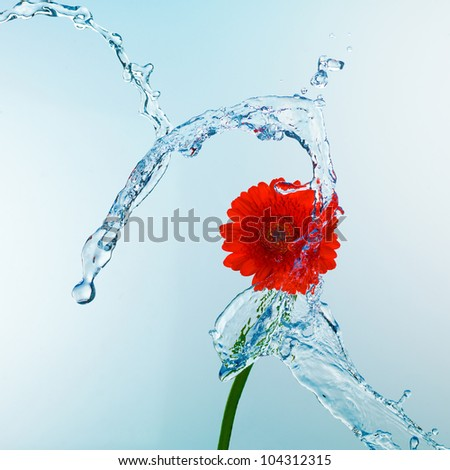 Close up view of red flower in water splash