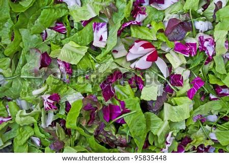 Close-up view of salad