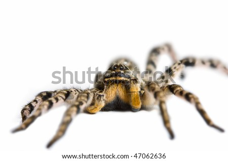 Close up view of spider, isolated on white