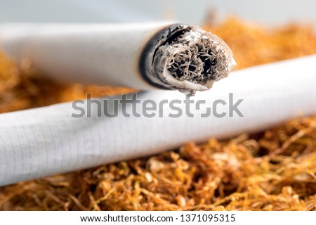 Close up view of the burning cigarette on the tobacco. Tobacco contains nicotine. Smoking cigarettes can lead to nicotine addiction. The addiction begins when nicotine acts on nicotinic acetylcholine. Stock photo ©