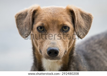 Close up view of the head of cute domestic dog.