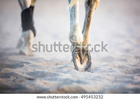 Close-up view of the horse's hoofs during show jumping event - splendid horse running in sand (shallow DOF)