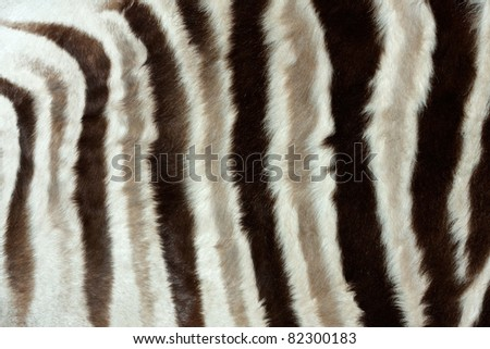 Close-up view of the skin of a Plains (Burchell's) Zebra (Equus quagga)