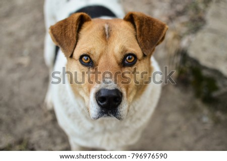 Close-up view of the stray dog head with beautiful eyes looking into the camera