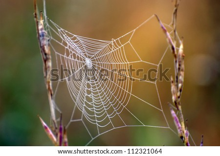 Close up view of the strings of a spiders web #112321064