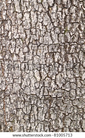 Close up view of tree bark
