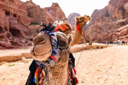 Close-up view of two beautiful camels in the Unesco World Heritage Site in Petra. Petra is a historical and archaeological city in southern Jordan.