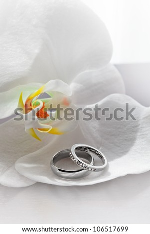 close up view of two wedding rings on white back #106517699
