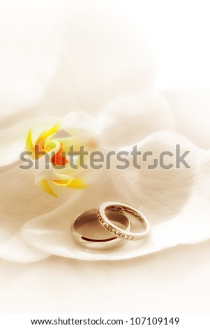 close up view of two wedding rings on white back