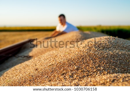 Close up view of wheat in a tractor-trailer during harvesting and a young farmer behind. #1030706158