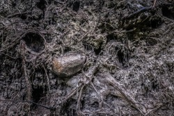 close up view on root system covered with soil, dirt, wood and stones, placed deep in a forest.