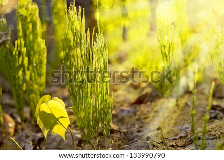 Close up view   plant as background abstract/ spring background