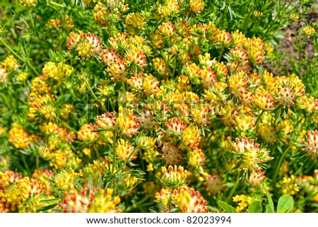 Close up view to multicolored clover flowers ez canvas close up view to multicolored clover flowers mightylinksfo