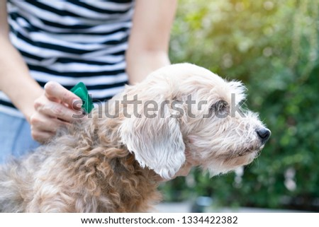 close up woman applying tick and flea prevention treatment to her dog