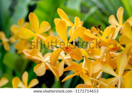 Free photos yellow flower 5 petals avopix close up yellow orchid bouquet flowers five lobe petals 1172714653 mightylinksfo