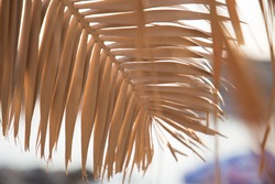 Close up yellow palm leaf