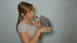 CLOSE UP: Young Caucasian woman lets her gorgeous African grey parrot sit on her finger while feeding it. Adorable shot of a female owner talking to her beautiful parrot and feeding it tiny treats.