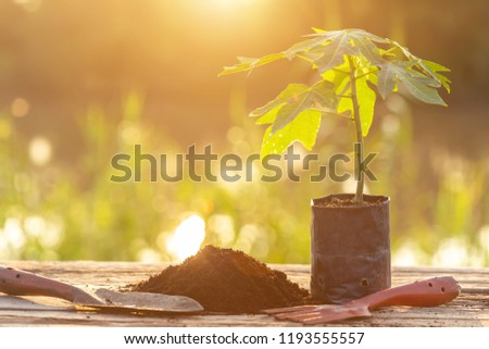 Close up young green plant in plastic back for planting on wooden table #1193555557