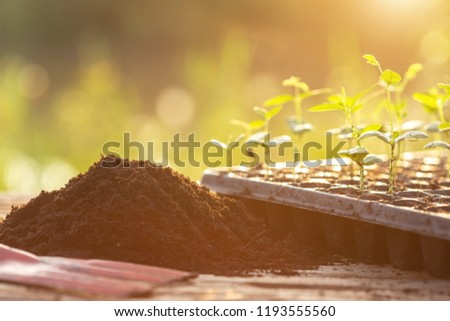 Close up young green plant in plastic back for planting on wooden table #1193555560