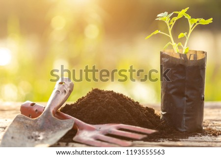 Close up young green plant in plastic back for planting on wooden table #1193555563