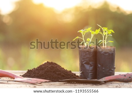 Close up young green plant in plastic back for planting on wooden table #1193555566