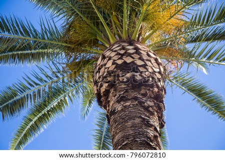 Close up zoomed in palm tree desert against blue sky summer beach vacation tropical background wallpaper