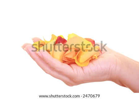 close-ups of hand full of yellow petals isolated on white