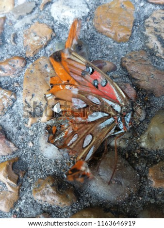 Close ups of small bugs and insects alive or dead #1163646919