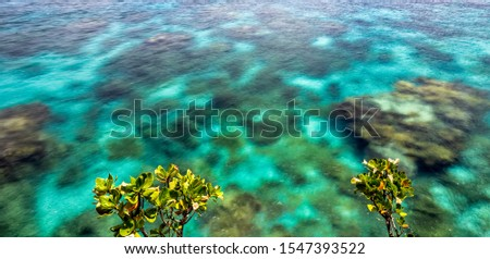Close view of crystal clear ocean water with coral reefs underneath it and small trees above the surface #1547393522