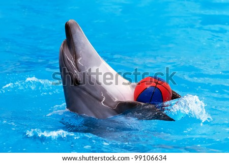 Close view of dolphin playing with ball in blue water