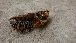 Close view of dried fish carcasses on the floor