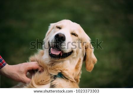 Close View Of Funny Young Happy Labrador Retriever. Smiling Dog. #1023373303