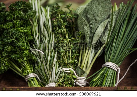 close view on fresh herbs bunch #508069621