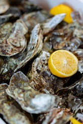 closed oysters, fresh oyster shell, mollusks in seafood market, sea restaurant, expensive fresh food, dish restaurant menu