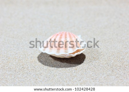 Closed Seashell on caribbean beach, closed-up