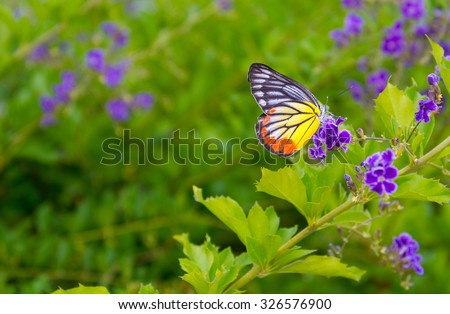 Closed up Butterfly on flower -Blur flower background.