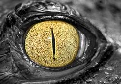 Closed up image of crocodile eye