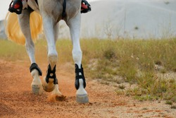 closed up of horse hooves in motion of canter or running phase. endurance and equestrian concept.