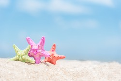 Closed up on colorful starfish,beautiful sea shells on the seashore with blue sky background. Vacation and summer conceptual.