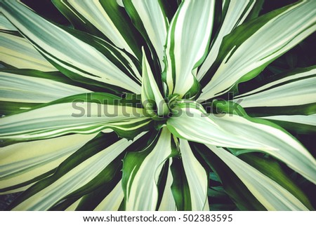 Closeup agave leaves plant vintage color