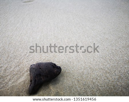 Closeup and macro shot on sandy beach  during the low tide. #1351619456