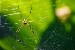 Closeup Animals view of spider