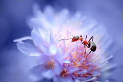 closeup ant on beautiful flower. natural macro background. picture with soft focus