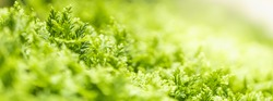 Closeup beautiful attractive nature view of green leaf on blurred greenery background in garden with copy space using as background natural green plants landscape, ecology, fresh cover page concept.