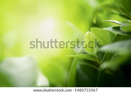 Closeup beautiful view of nature green leaf on greenery blurred background with sunlight and copy space. It is use for natural ecology summer background and fresh wallpaper concept. #1480753367