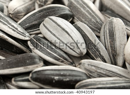 stock photo : Closeup black and white sunflower seed background