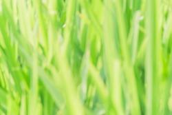 closeup blurred green grass warm sunlight
