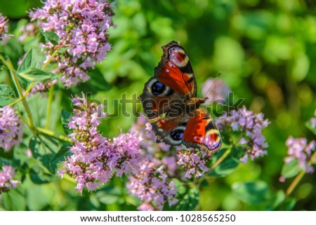 Closeup butterfly on flower ,butterfly and flower,butterfly on a flower blurry background,butterfly on flower,butterfly on flower in garden or in nature #1028565250