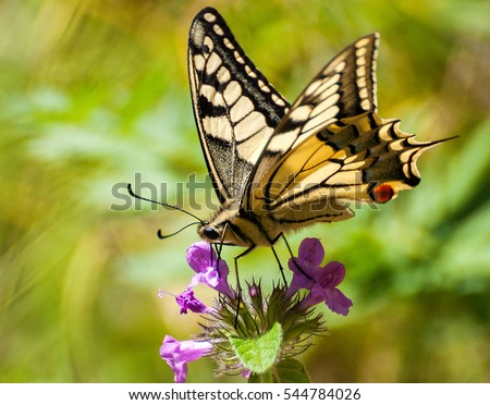 Closeup butterfly on flower ,butterfly and flower,butterfly on a flower blurry background,butterfly on flower,butterfly on flower in garden or in nature #544784026