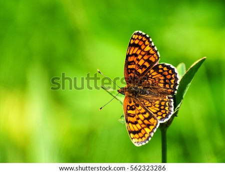 Closeup butterfly on flower ,butterfly and flower,butterfly on a flower blurry background,butterfly on flower,butterfly on flower in garden or in nature #562323286